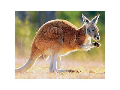 Austrálie - Fraser Island
