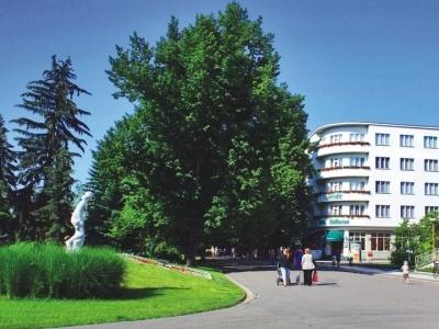 Bellevue - Tlapák