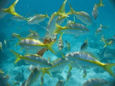 Kombinace Varadero - hotel Sol Sirenas Coral, Cayo Largo - hotel Melia Sol Pelicano