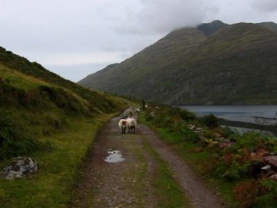 Dublin + Aranské ostrovy + Moherské útesy + NP Connemara
