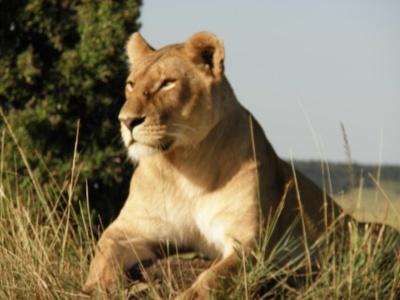 Keňa - Tanzanie safari a Zanzibar - Bez výstupu na Mt. Keňu