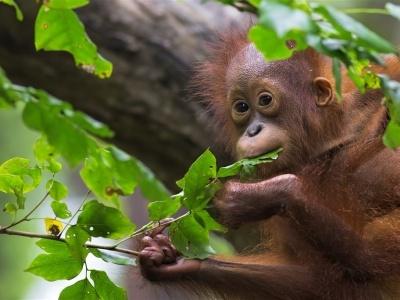 Za orangutany na úchvatné Borneo