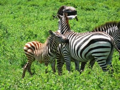 Příroda východní Afriky + Uganda