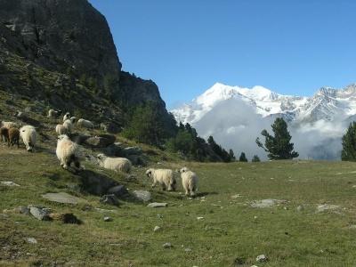 Švýcarsko - Bernské Alpy (cykloturistika) 2020