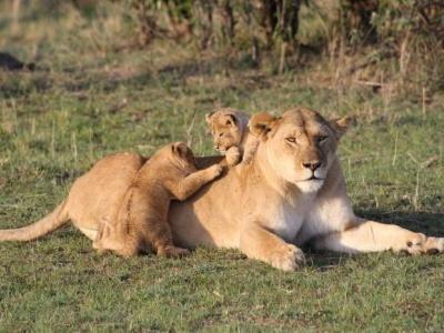 Jezera v Great Rift Valley a Masai Mara Safari - s průvodcem
