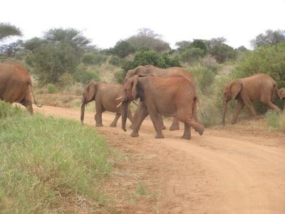 Keňa - Safari a oceán 13 dní