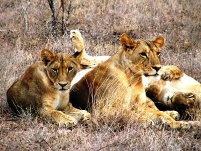 Keňa - Safari a oceán 15 dní