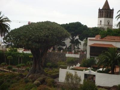 To nejlepší z Tenerife - pobyt na slunném jihu i historickém severu